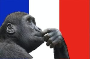 French_Monkey_opt